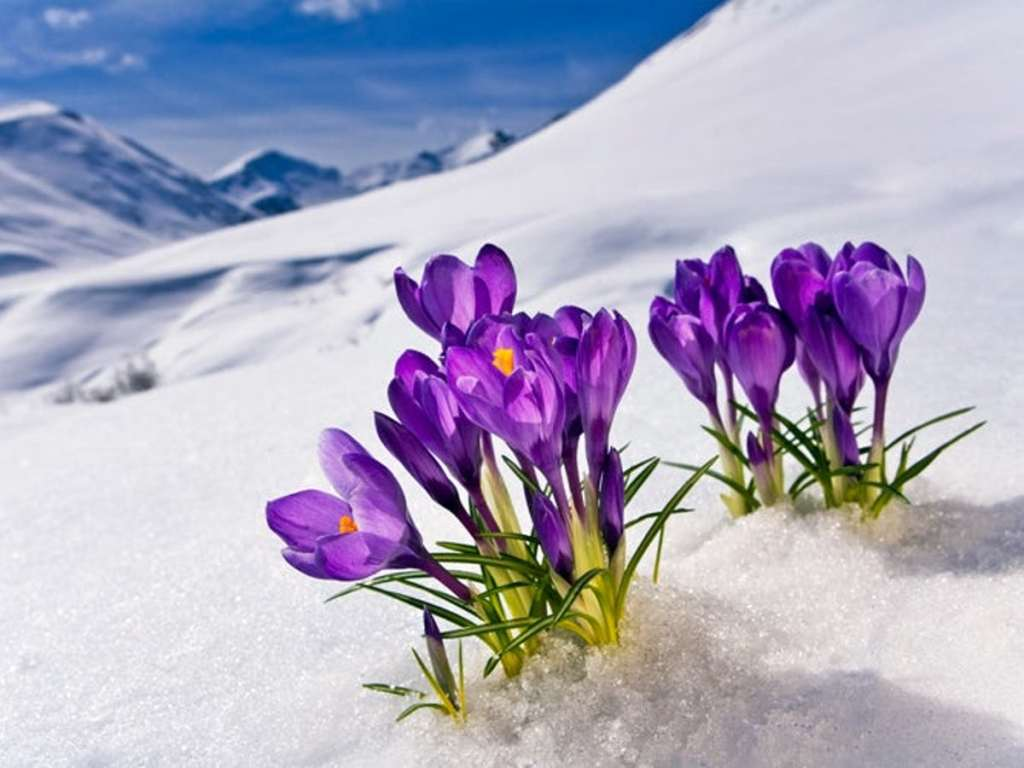 This image has an empty alt attribute; its file name is flowers-in-snow-1.jpg